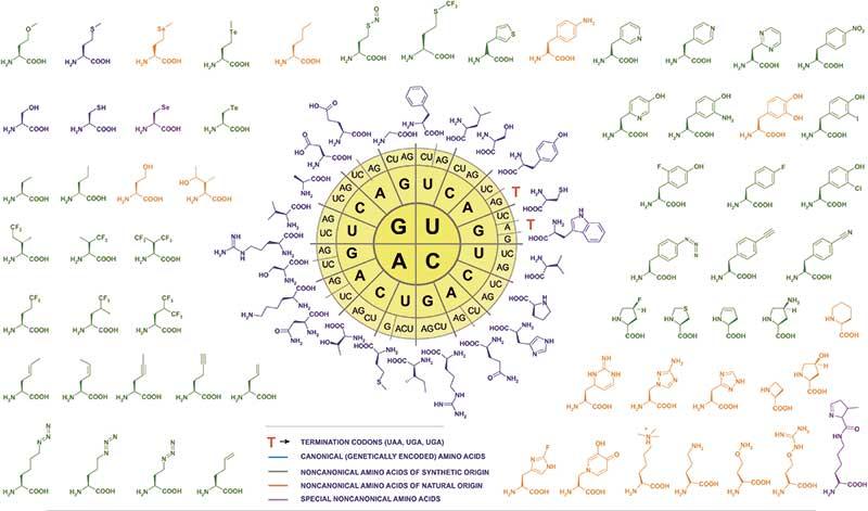 aminosäuren chemie